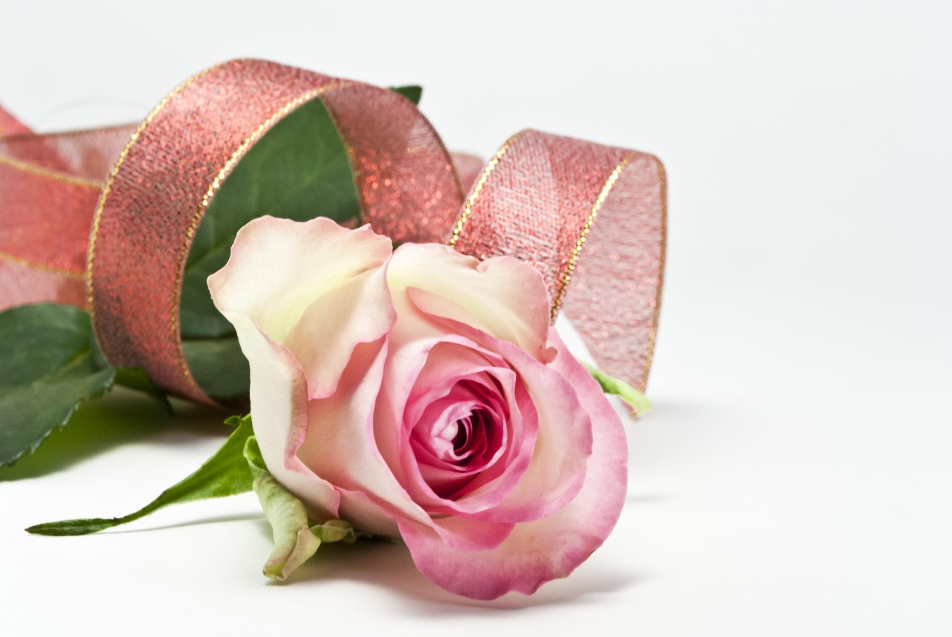 ピンクのバラとリボン