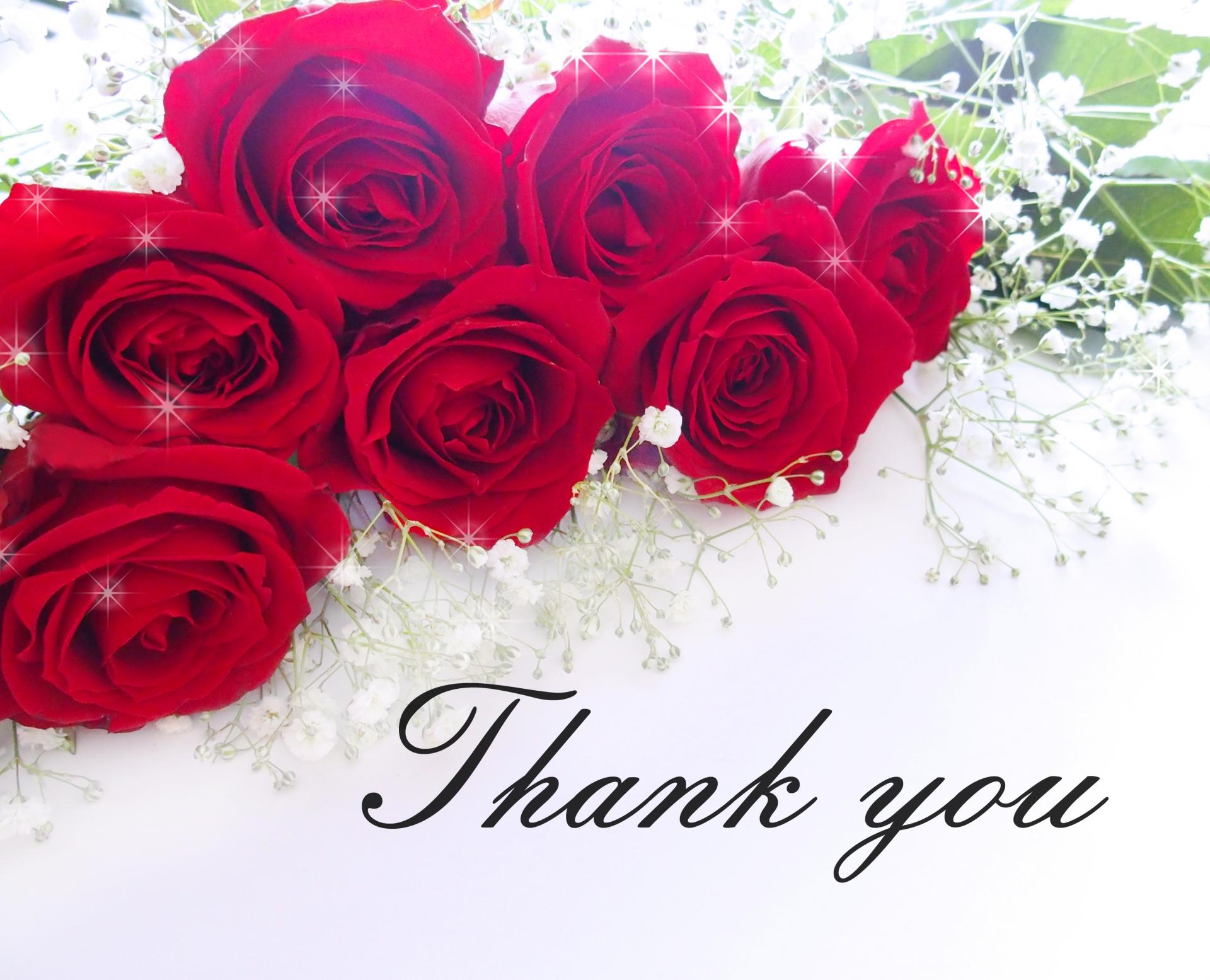 赤いバラとthank you の文字