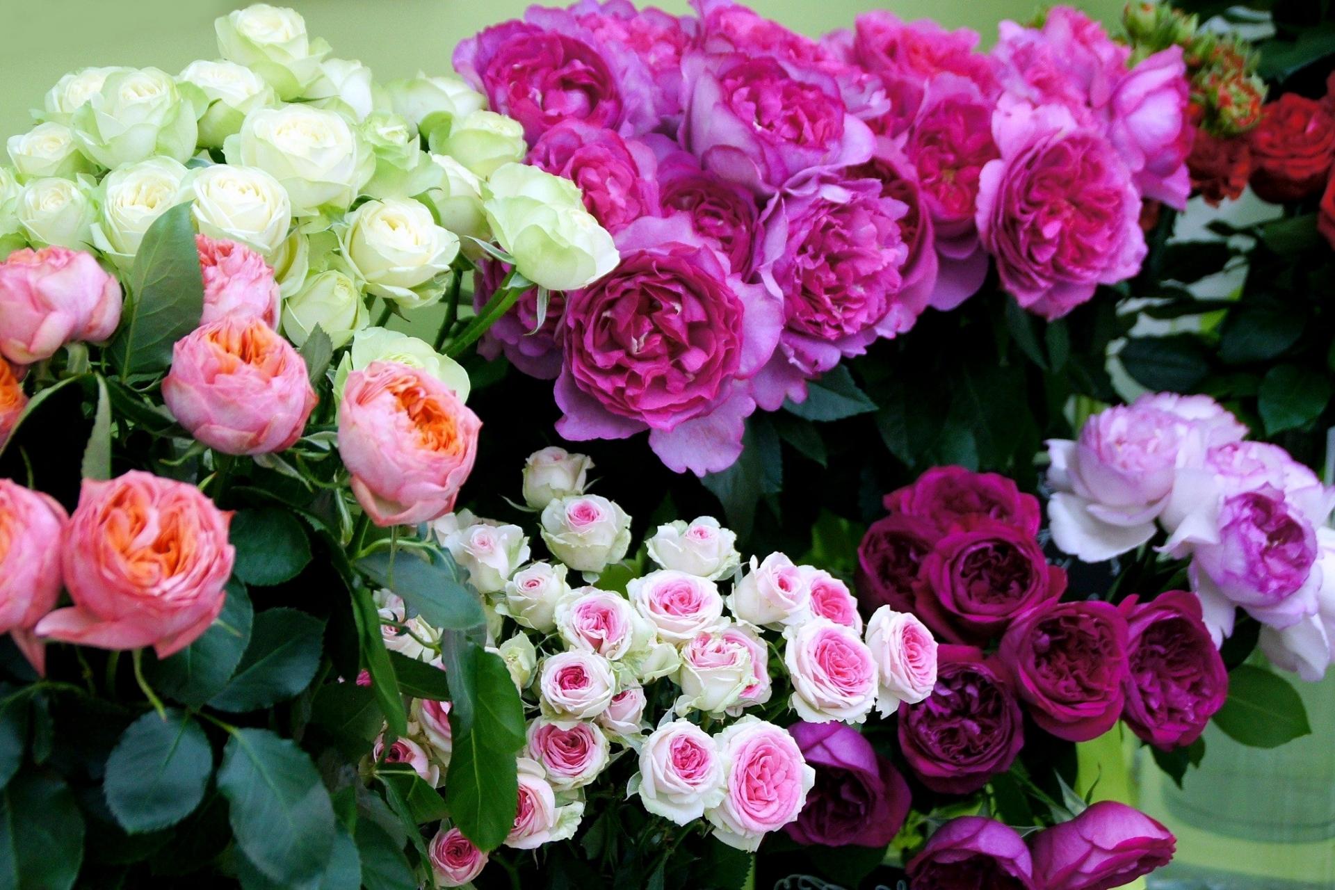花束の定番!バラには形・色・大きさ、種類がこんなに豊富!