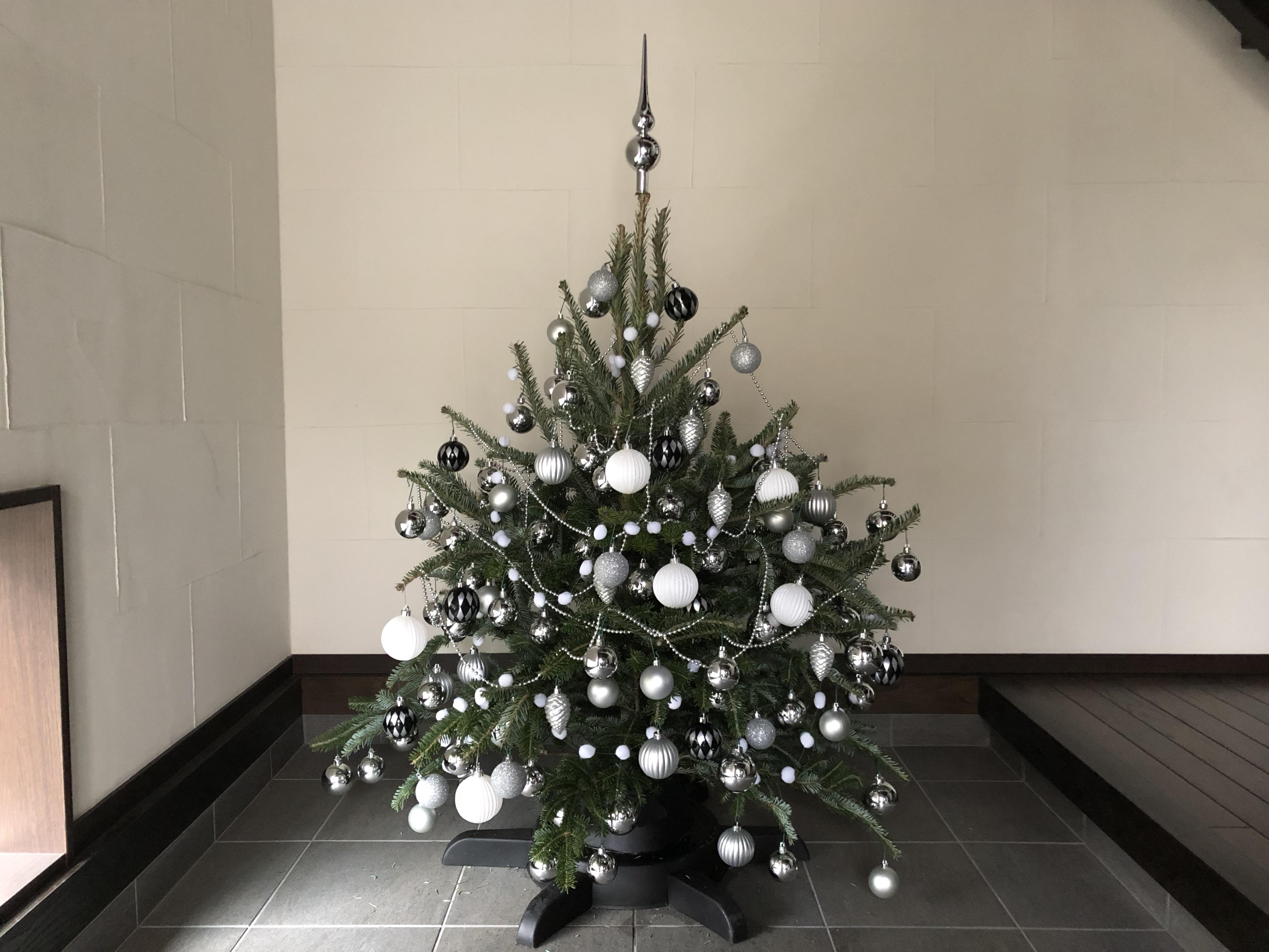 本物のモミの木のクリスマスツリー