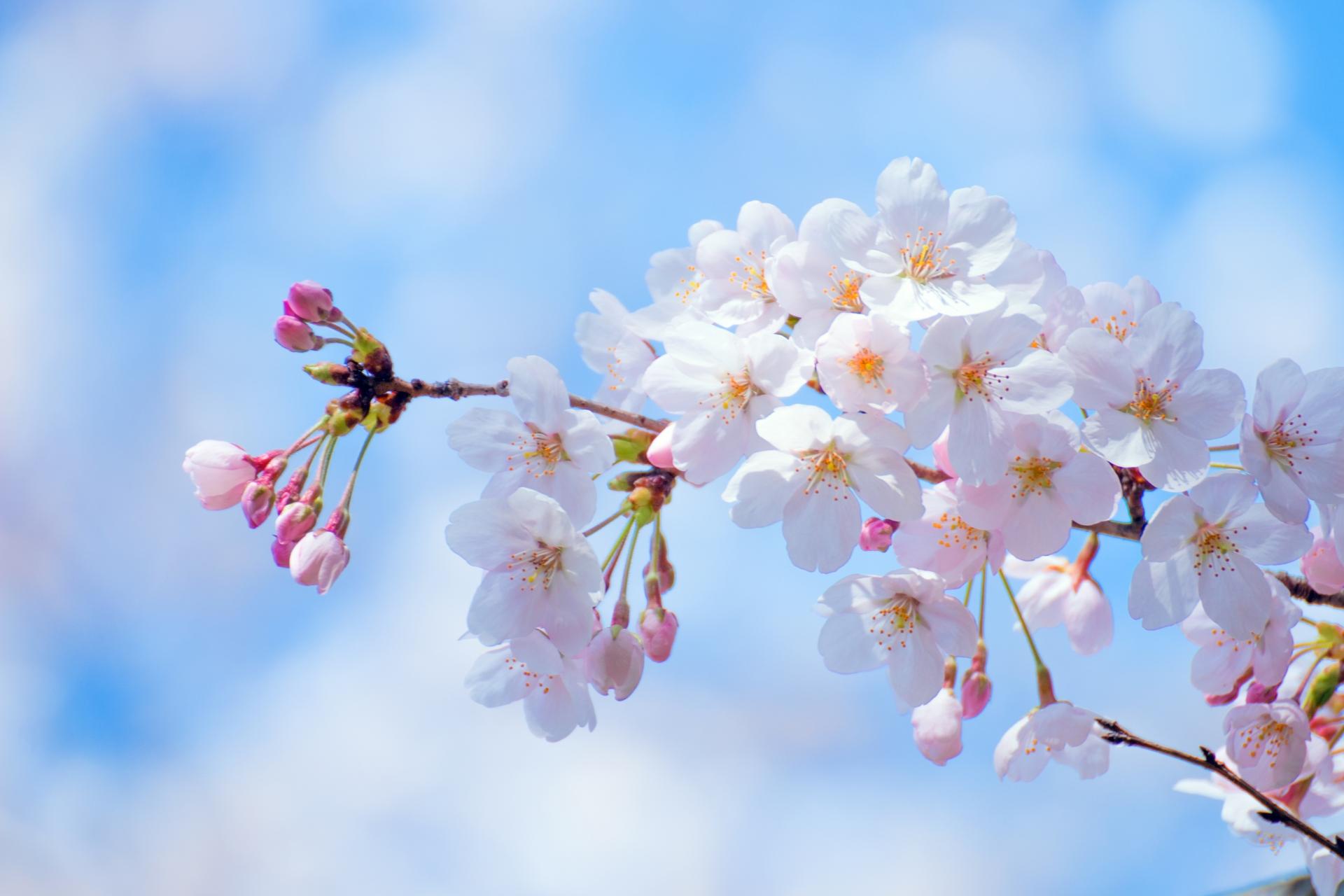 合格祝いや就職祝いに贈るお花のおすすめや相場を解説!