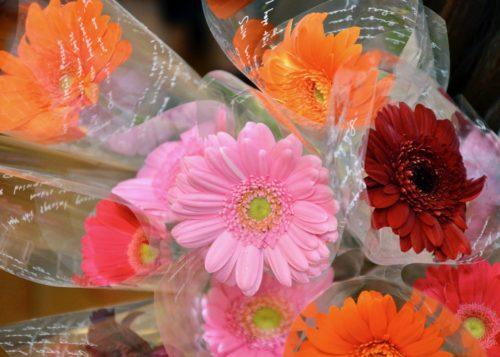 1輪のお花のプレゼント