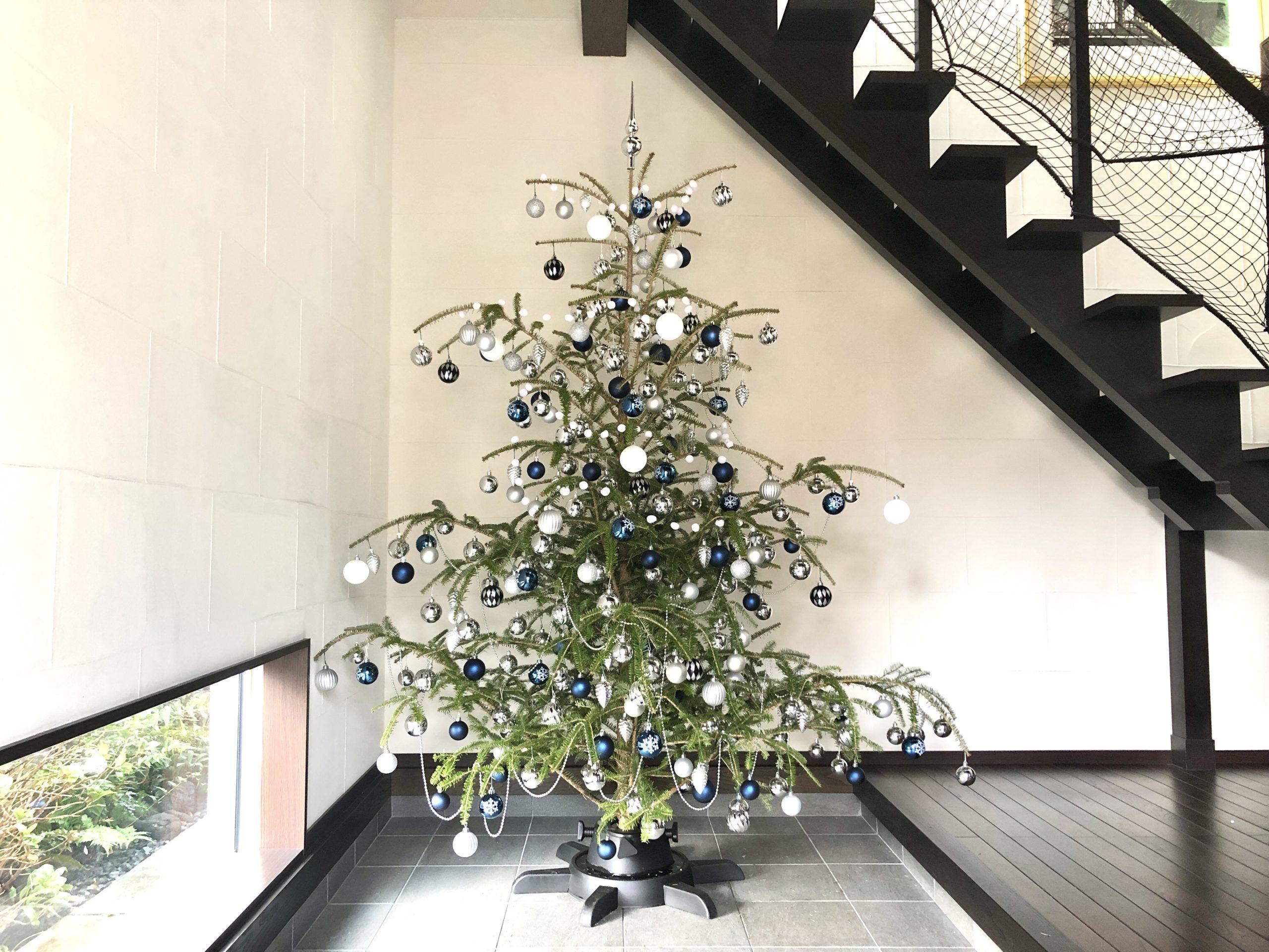 2020年もみの木のクリスマスツリー