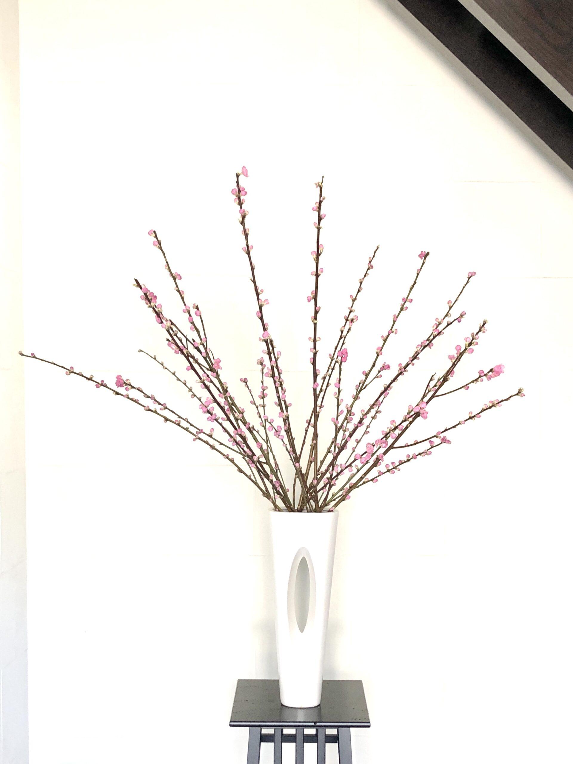 ひな祭りの生け花。桃の花の1種いけ。
